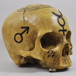 Picture of Witchcraft Skull