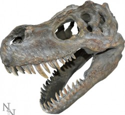 Picture of Tyrannosaurus Rex Skull Large Wall Plaque 40 cm