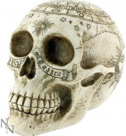 Picture of Astrological Skull 20cm
