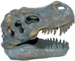 Picture of Tyranasaurus Rex Skull 18.5cm