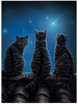 Picture of Wish Upon a Star Cat 3D Picture (Lisa Parker) 28 x 38 cm