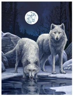 Picture of Warriors of Winter Wolf 3D Poster 28 x 38 cm