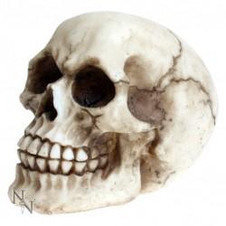 Picture of Joker Skull Ornament 11.5cm